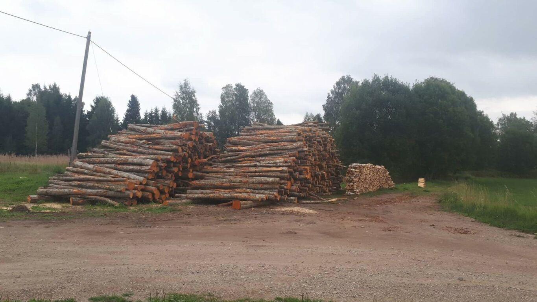 Ostan 3m pikkust puitu kütteks Põlvamaal