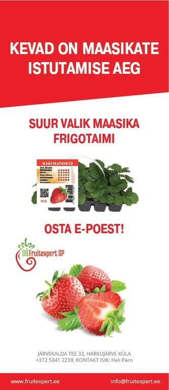 Maasikataimed / Frigo ja paljasjuursed/