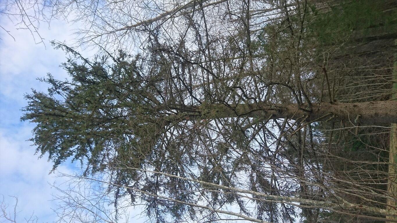 Igasugu kõveraid puid ja kände