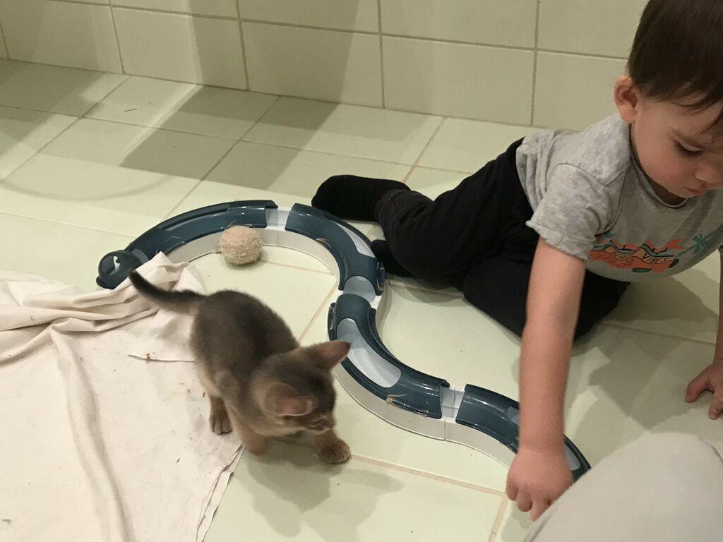 Abessiinia kassipojad Viimsi