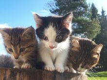 Kaks kassipoega otsivad kodu !