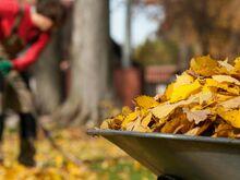 Lehtede koristamine ja äravedu