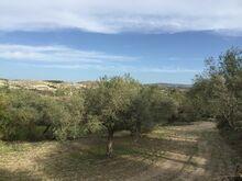 Oliivisalu Sitsiilias