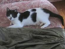 Emane kass Kuningunde
