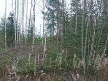 Raiutud metsamaa