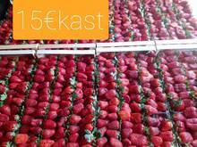 Kreeka maasikas