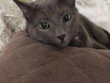 Tubli ja sõbralik emane kass otsib uut kodu!