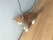 Armsad kassipojad (juba saab broneerida)