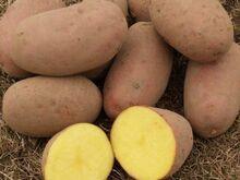Pakiautomaaditäis Laura kartulit, u. 10 kilo.