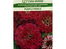 Harilik pruudisõlg Purple Prince 10 seemet