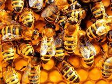 Mesila inventari müük