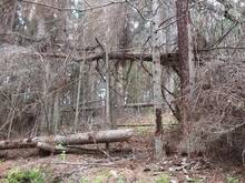 Kasvavat metsa ja metsakinnistuid!