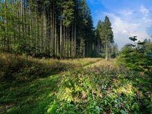 Metsamaa
