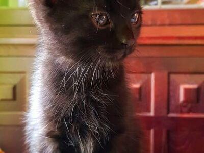 Must 4kuune isane kassipoeg