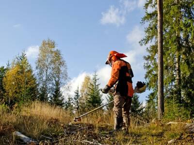 Pakume tööd Rootsis võsalõikajatele