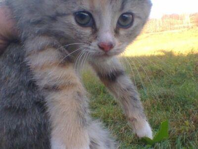 Emane kassipoeg otsib kodu